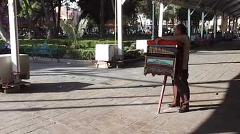 organillero playing in square